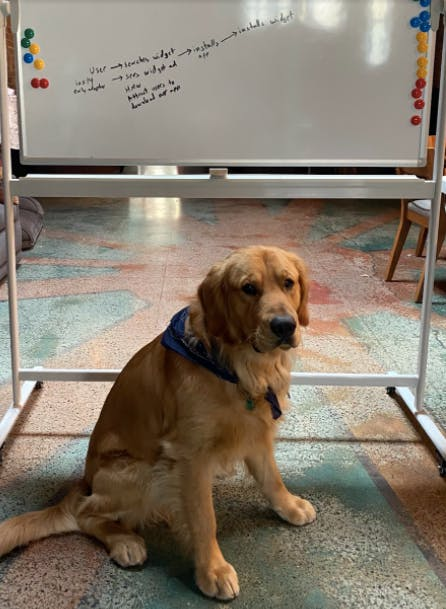 image of a golden retriever in front of a white board