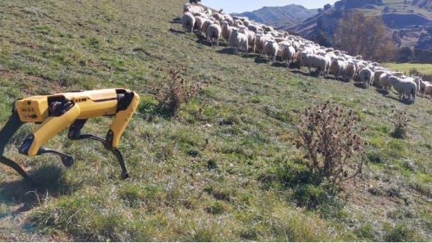 image of a robotic shepherd