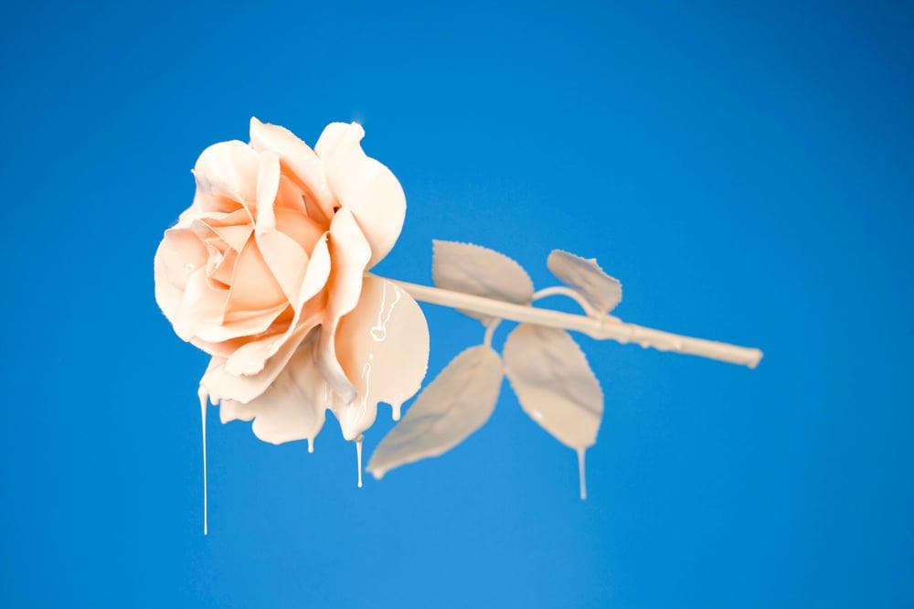 peachy rose on blue